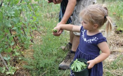 6 Ways to Save the Veg Patch from Toddlers – Gardening with Kids